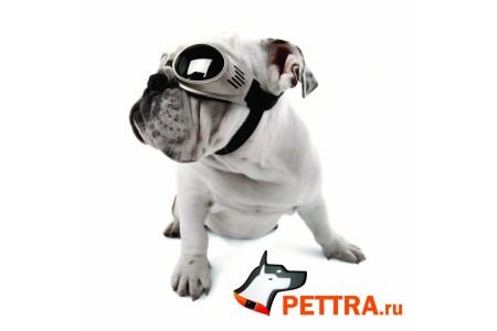 Очки для собак Doggles ILS Small