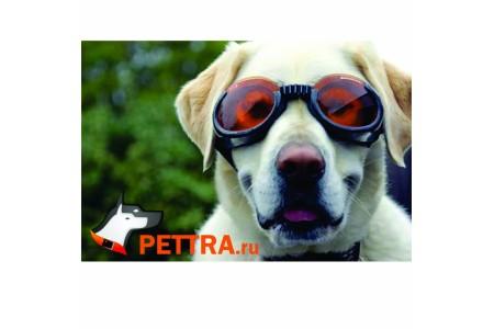 Очки для собак Doggles ILS XLarge