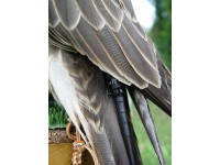 Передатчик для птиц и дронов Tinyloc F22
